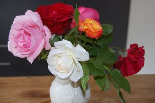Garden roses_04May2011